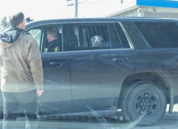 perro-arrestado-compressor